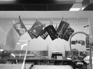 Workshop - Cyanotype Printing